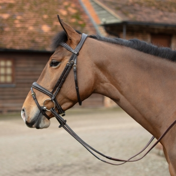 Mark Todd Performance Flash Bridle - Brass Fittings