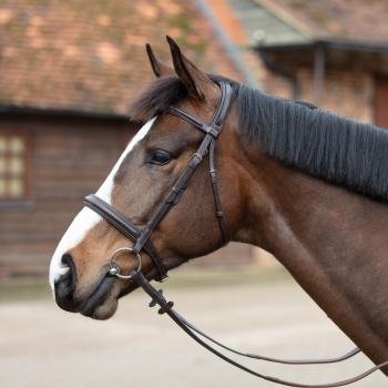 Mark Todd Raised Fancy Stitch Leather Headcollar