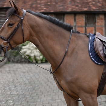 Mark Todd Standing Martingale