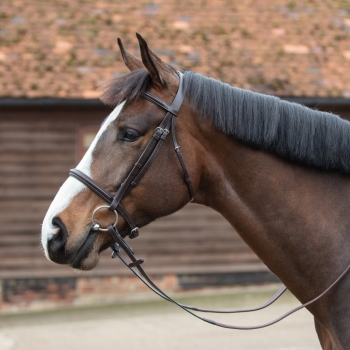 Mark Todd Plain Raised Bridle with Cavesson Noseband