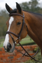 Mark Todd Plain Raised Bridle with Grakle Noseband