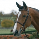 Mark Todd *Clearance* Plain Raised Bridle with Cavesson Noseband